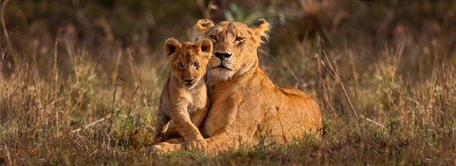 South_africa_660x-241_a