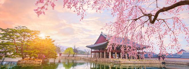 1400-ITL-Cherry-Blossom-660x241-A